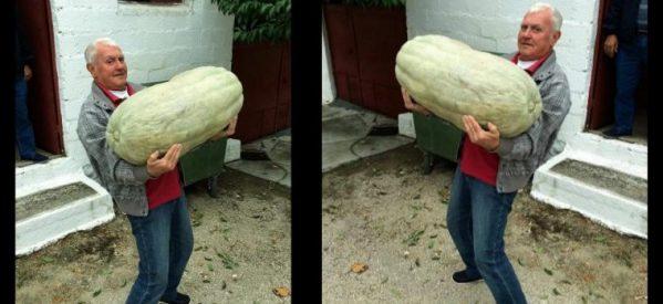 Τεράστια κολοκύθα στα Τρίκαλα και ζυγίζει…50 κιλά!