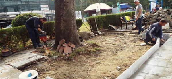 Εργασίες διάσωσης δέντρων στην κεντρική πλατεία