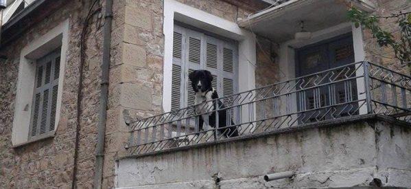 Χαρίζεται σκύλος