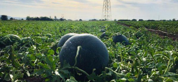Τρίκαλα – Καταστροφές σε καλλιέργειες από το χαλάζι