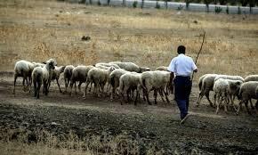 Στον Εισαγγελέα οι κτηνοτρόφοι της Θεσσαλίας