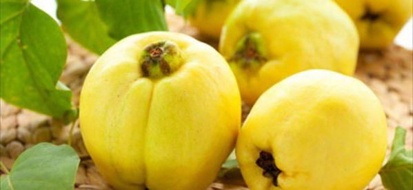Ο Νίκος Χαλαστάρας με τα «χρυσά µήλα» από τα Λεχώνια Μαγνησίας