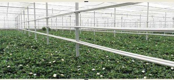 Στον Βόλο η δεύτερη μεγαλύτερη παραγωγή γαρδένιας στην Ευρώπη