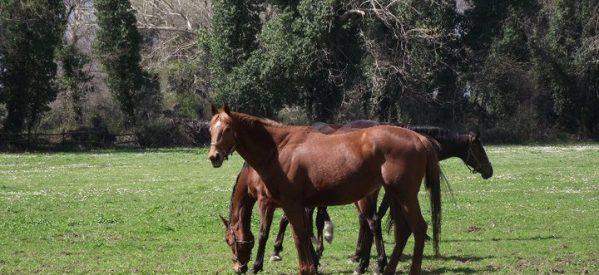 Φεύγουν και τα τελευταία άλογα από το Ιπποφορβείο Λαζαρίνας