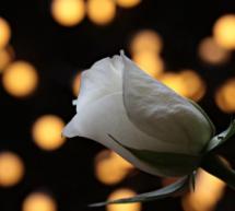 Την Κυριακή το 40ημερο μνημόσυνο της Ελλης Διβάνη