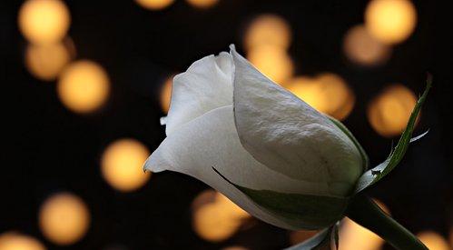 Απεβίωσε η Ελένη Σπύρου – Τσιότρα