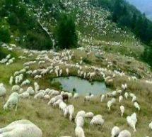 Τρικαλινοί κτηνοτρόφοι στέλνουν ζωοτροφές σε συναδέλφους τους στην Εύβοια