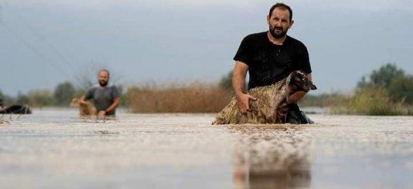Να «τρέξει» η εφάπαξ αποζημίωση ζητούν οι πληγέντες κτηνοτρόφοι