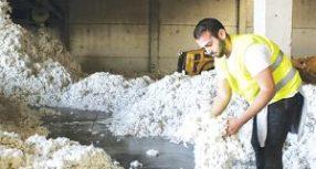 Κανονικά οι παραλαβές και η εκκόκκιση βαμβακιού στο εκκοκκιστήριο της ΕΑΣ Τρικάλων