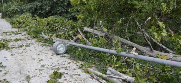 Τρίκαλα: Πτώσεις δένδρων από το ξαφνικό μπουρίνι