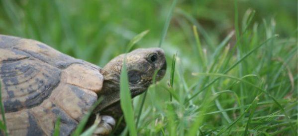 Τρίκαλα: Πέταξαν τέσσερις χελώνες σε κάδο απορριμμάτων!