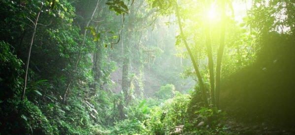 Ο κίνδυνος πυρκαγιάς με την εγκατάσταση  ανεμογεννητριών στα παρθένα δάση των Τρικάλων